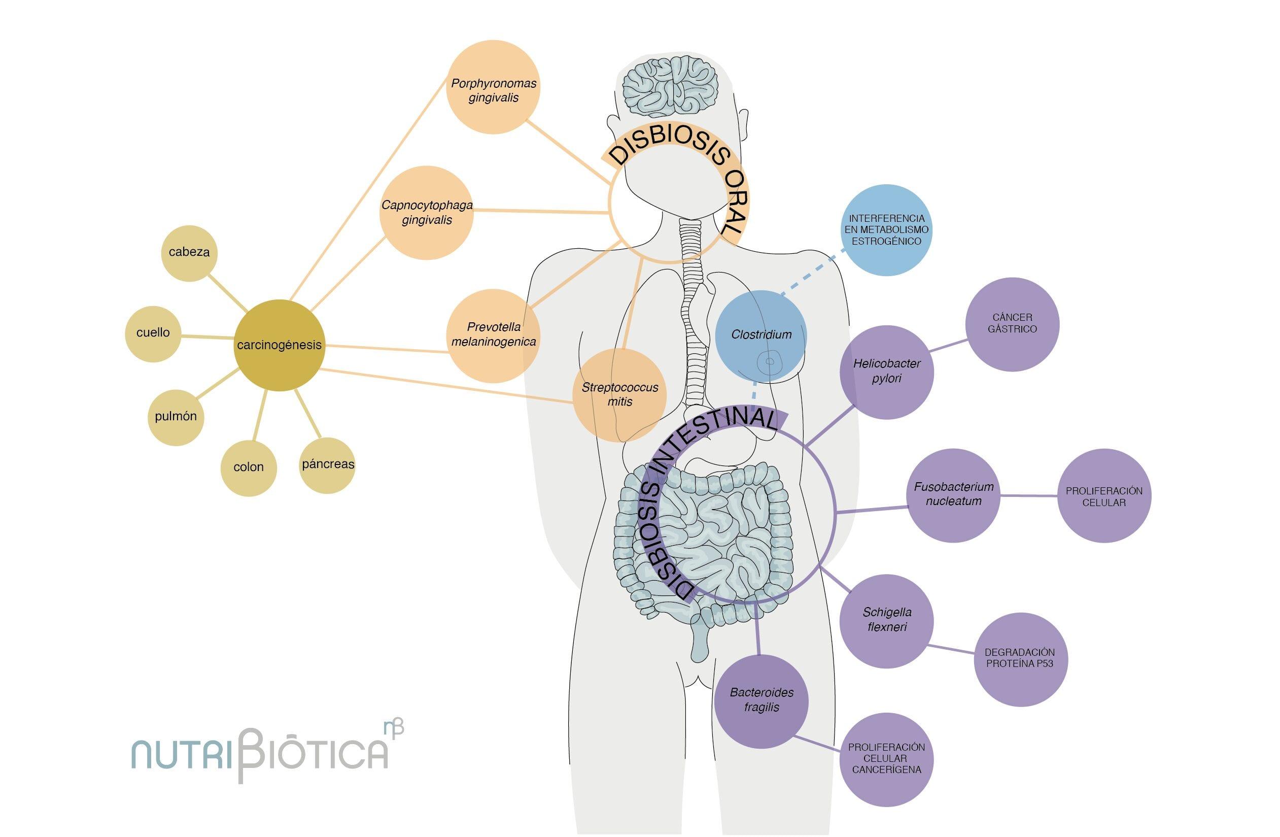 cancer microbiota