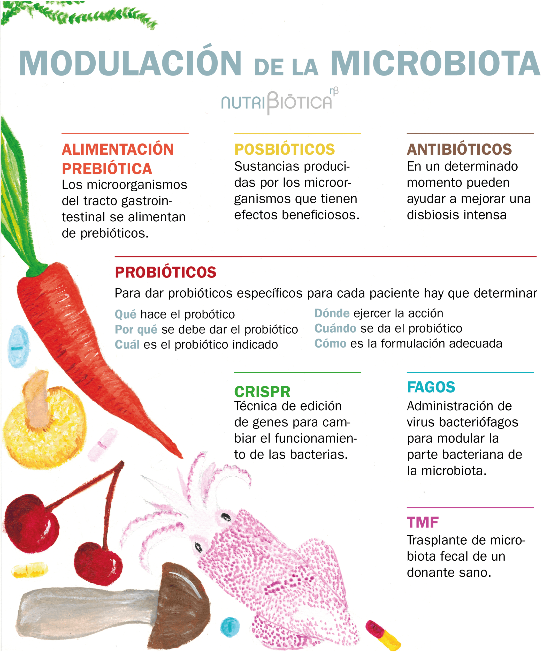 modulacion microbiota