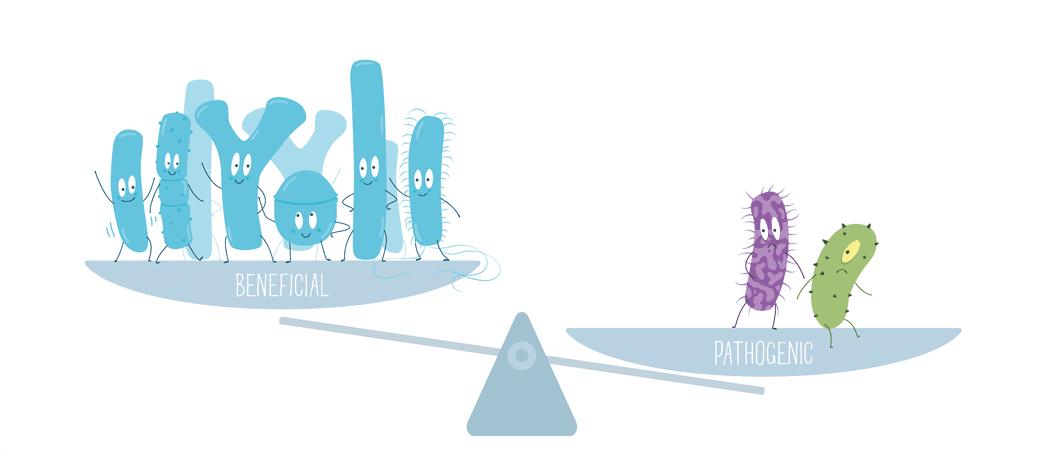 probióticos 4 generación