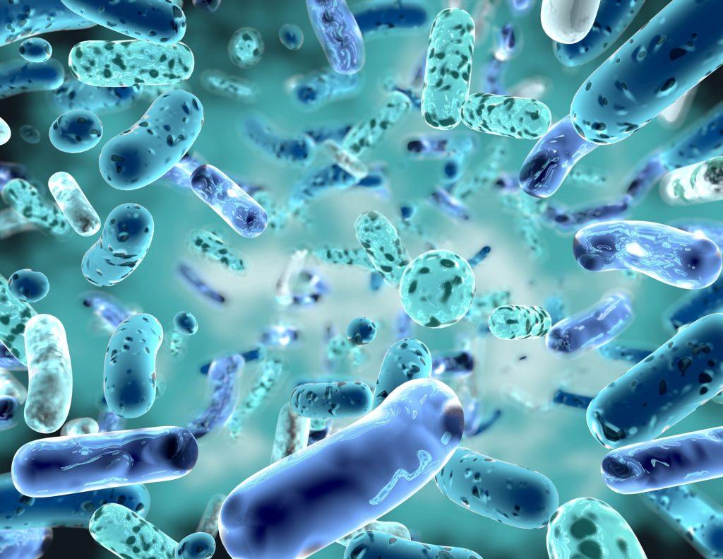 microbiota resistencia insulina